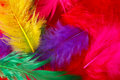 Bright colored feathers background Royalty Free Stock Photo