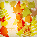 Bright colorful autumn leaves vector Royalty Free Stock Images