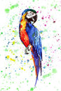 Bright colorful cute beautiful jungle tropical yellow and blue big parrot on a colorful spray background watercolor hand illustrat