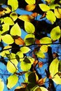Bright colorful leaves Stock Photo