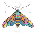 Bright with colorful moth Royalty Free Stock Photo