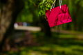 Bright colorful red pink bag hanging in the tree park Stock Image