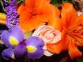 Bright colors flowers Royalty Free Stock Photo