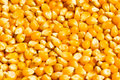 Bright corn kernels Stock Photo