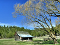 Bright day in the countryside an old barn near some large trees north idaho Royalty Free Stock Images