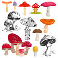 Bright different types of mushrooms vector.