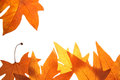 Bright fall leaves background Royalty Free Stock Images