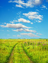 Bright fantasy background country road in the fields Royalty Free Stock Photos