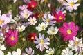 Bright Floral Decorative Backg...