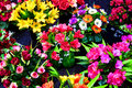 Bright Flowers with Beautiful Color at a Market Stock Images
