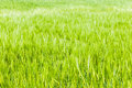Bright grass Stock Photography