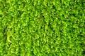 Bright green algae Royalty Free Stock Photo