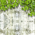 Bright green foliage on background summer stone wall ruined Stock Images