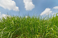 Bright green grass Stock Photo