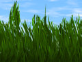 Bright green grass on a blue sky backgrounds background Royalty Free Stock Photography
