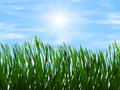 Bright green grass on a blue sky sunbeam backgrounds background Royalty Free Stock Image