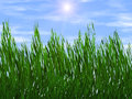 Bright green grass on a blue sky sunbeam backgrounds background Royalty Free Stock Photo