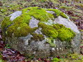 Bright Green Moss Patches on Large Boulder Surface. Royalty Free Stock Photo
