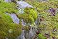 Bright Green Moss Patches on Large Rock Surface. Royalty Free Stock Photo