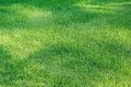 Bright green short grass with shadow spots