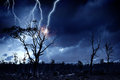 Bright lightning hit the tree Royalty Free Stock Photo