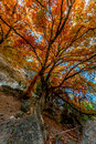 Bright orange foliage at lost maples state park texas beautiful fall of side of clift Royalty Free Stock Photos