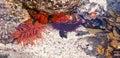 Bright orange sea anemone Royalty Free Stock Photo