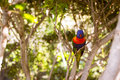 Bright parrot is feeding from bowl with seeds in Loro Park (Loro Parque), Tenerife Royalty Free Stock Photo