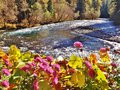 BRIGHT PINK FLOWERS WITH THE RIVER IN THE BACKGROUND Royalty Free Stock Photo