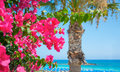 Bright pink flowers and the sea on the coast of Cyprus Royalty Free Stock Photo