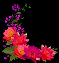 Bright pink lily flowers on black Royalty Free Stock Photos