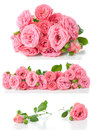 Bright pink roses collage isolated flowers and buds on a white background Stock Photo