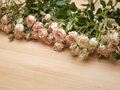 Bright pink spray roses on wooden background Royalty Free Stock Photo