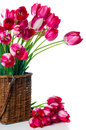 Bright pink tulips in a wicker basket bouquet of on white background isolated Royalty Free Stock Images