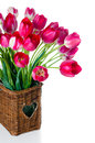 Bright pink tulips in a wicker basket bouquet of on white background isolated Stock Photo