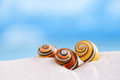 Bright polymita shells on white beach sand under the sun Royalty Free Stock Photo