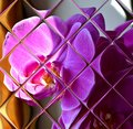 Bright purple orchid reflected in the glass tile