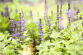 Bright purple wild flowers in soft focus and with beautiful boke Royalty Free Stock Photo