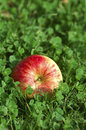 A bright red apple into green clovers Royalty Free Stock Photography