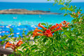 Bright red flowers and the sea on the coast of Cyprus Royalty Free Stock Photo