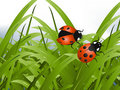 Bright red Lady Bug Royalty Free Stock Photography