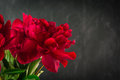 Bright red peony flowers
