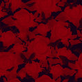 Bright red rose on a dark background, seamless pattern