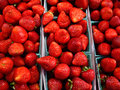 Bright Red Strawberries Stock Photo