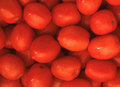 Bright red tomatoes Royalty Free Stock Photo