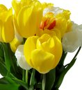 Bright yellow festive bouquet of tulips on white background