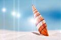 Bright  sea shell on white beach sand Royalty Free Stock Photo