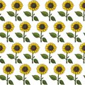 seamless stylized colorful bright sunflower pattern texture element on white background Royalty Free Stock Photo