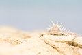 Bright seashell lies on the beach in the sand Royalty Free Stock Photography