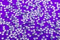 Bright and Shiny Precious Rhinestone Swarovski crystal color on a purple background. Royalty Free Stock Photo